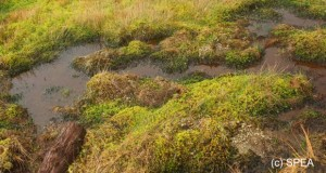 Proteção e gestão adequadas asseguram uso sustentável das zonas húmidas