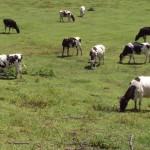 Diretora Regional do Desenvolvimento Rural destaca investimento jovem na agropecuária