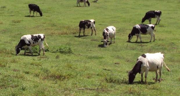 Neto Viveiros diz que podem surgir novas medidas no POSEI-Agricultura após auscultação dos parceiros
