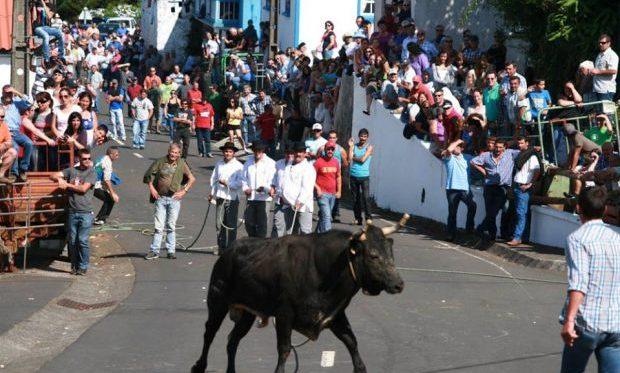 Ganadeiros satisfeitos com retoma das touradas à corda na ilha Terceira