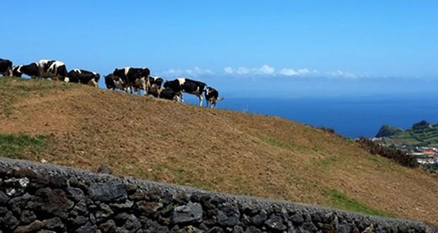 Governo dos Açores reforça medidas e antecipa pagamento de ajudas que vão abranger mais agricultores