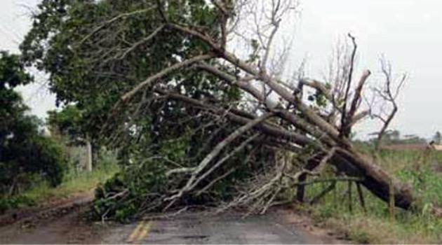 Governo dos Açores avalia apoio a empresários agrícolas afetados pelo mau tempo