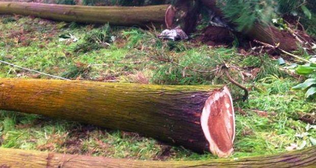Governo dos Açores faculta aos empresários documentos exigidos por novas regras da UE para comércio de madeira