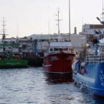 Governo dos Açores reúne com parceiros do setor para debater gestão da quota de goraz