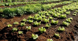 Governo dos Açores determina apoio a explorações hortícolas, florícolas e frutícolas