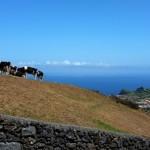 I Fórum do Leite analisa os novos desafios à produção, transformação e comercialização nos Açores