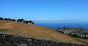 Agricultores de São Jorge obrigados a enterrar animais mortos devido à selagem das lixeiras (c/áudio)