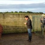 Região disponibiliza mais de 3.900 hectares de pastagens baldias aos agricultores dos Açores
