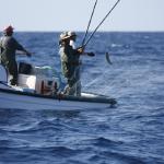 Atuneiros da Madeira a pescar nos Açores vão ter observadores a bordo