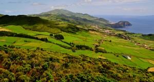 Governo dos Açores apoia agricultores a promover o bem-estar animal nas explorações
