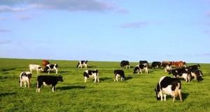 Governo dos Açores investe na melhoria das acessibilidades agrícolas em São Jorge