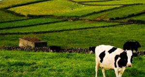 Governo dos Açores prolonga até 31 de maio candidaturas a apoios às produções agrícolas