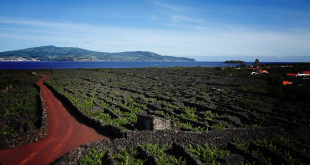 Processo de reabilitação da Paisagem da Cultura da Vinha do Pico distinguido com menção honrosa nos Green Project Awards 2016