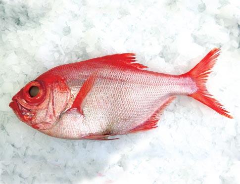 Pesca do Imperador reabre nos Açores