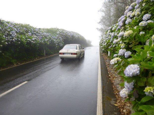 Passagem do furacão Alex origina encerramento preventivo de várias estradas nos Açores