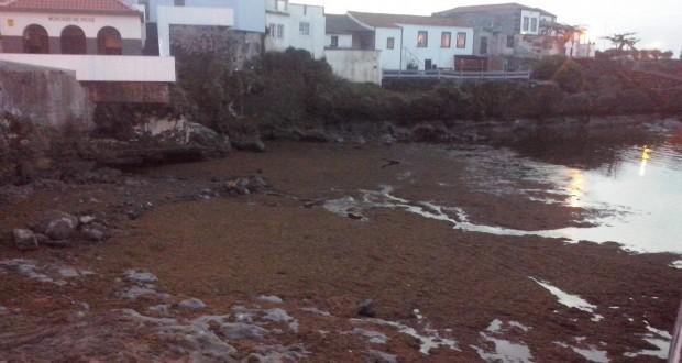 Governo dos Açores antecipa análises à qualidade da água do mar e do ar no Porto da Madalena