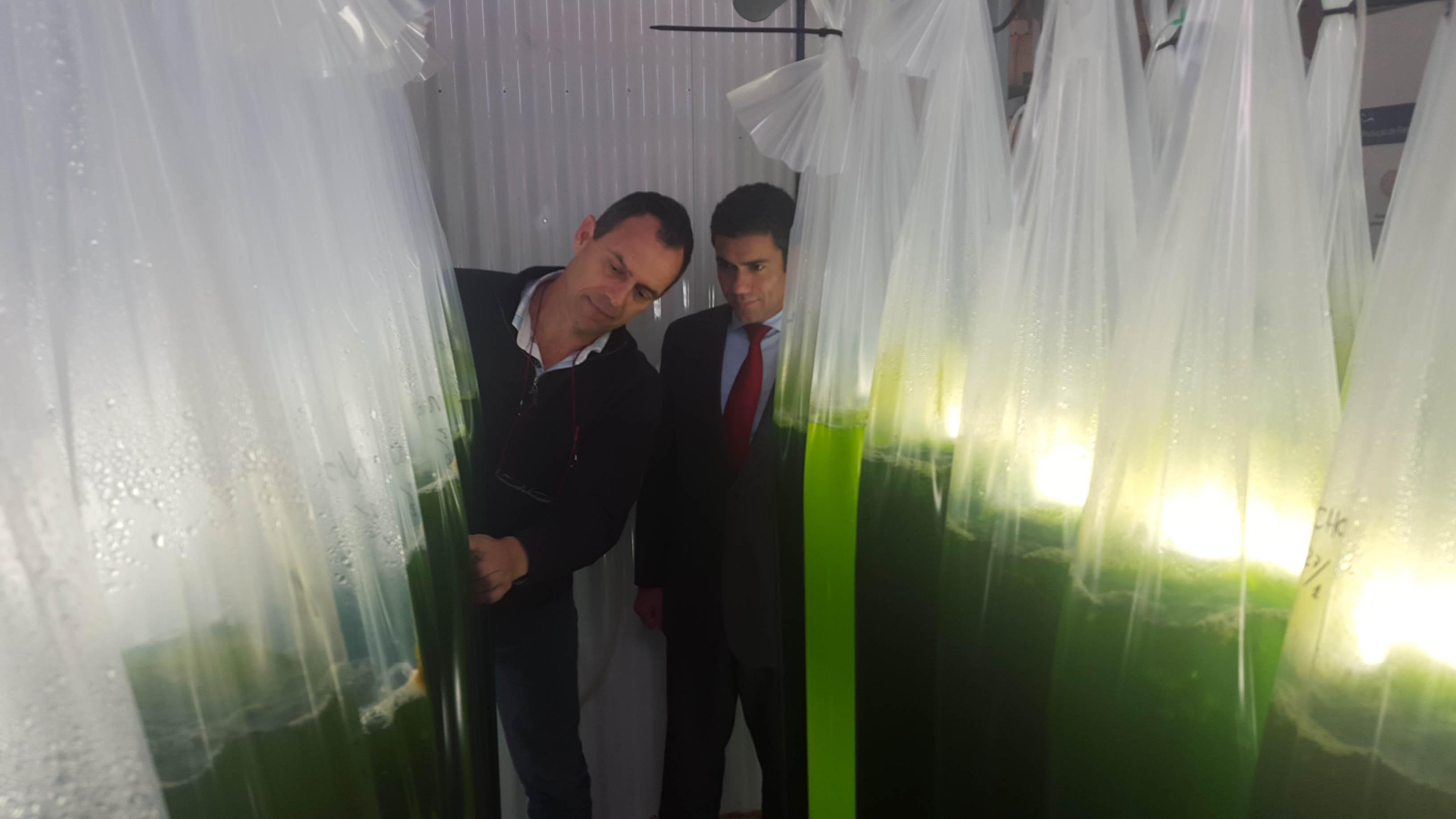 Intercâmbio de experiências entre Açores e Madeira em aquicultura é muito útil, afirma Brito e Abreu