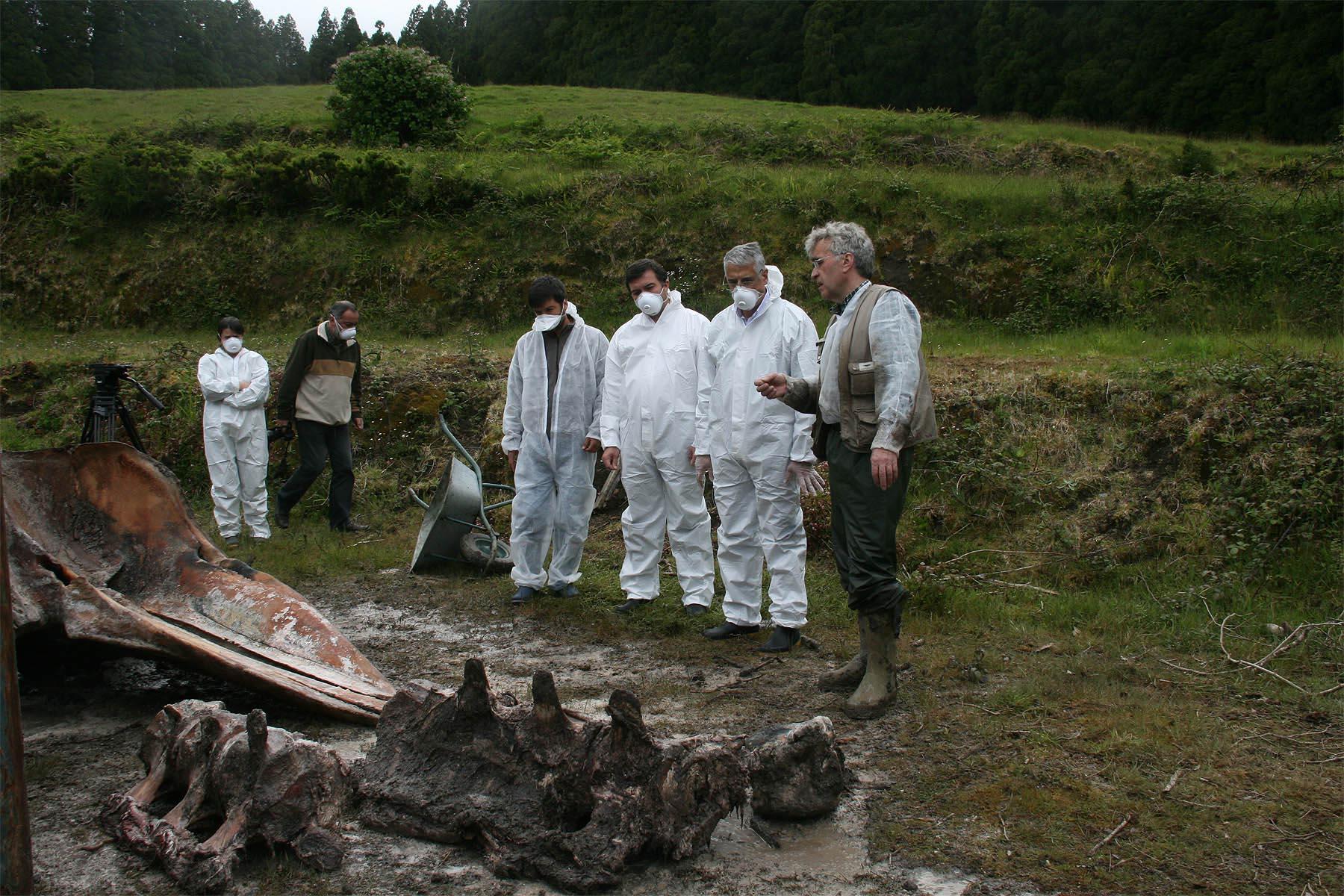 Exumação de esqueleto de cachalote para exposição é projeto pioneiro nos Açores, afirma Neto Viveiros