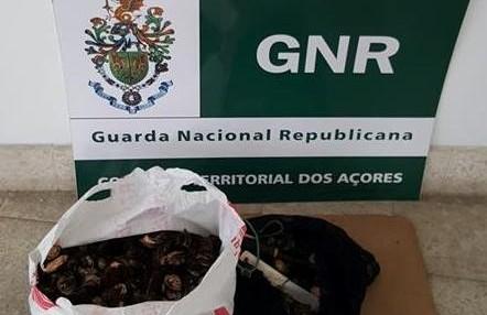 GNR apreende 10,5 kg de lapas, em São Jorge