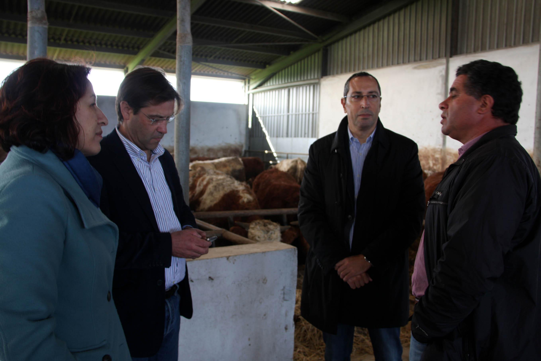 Exportação de carne bovina dos Açores aumentou 25%, anuncia João Ponte