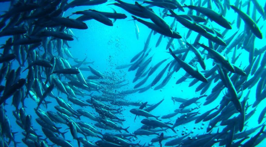 Primeiro projeto de aquacultura nos Açores está em fase de instalação