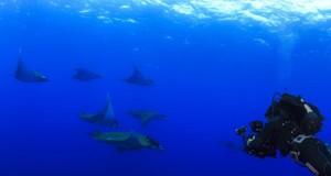 Açores nomeados para Melhor Destino de Mergulho 2017