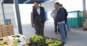 POSEI destina cerca de 940 mil euros à produção de banana