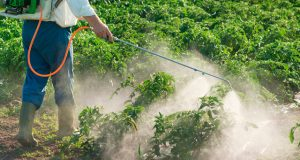 Governo dos Açores promove formação de aplicadores de produtos fitofarmacêuticos para 2.400 agricultores