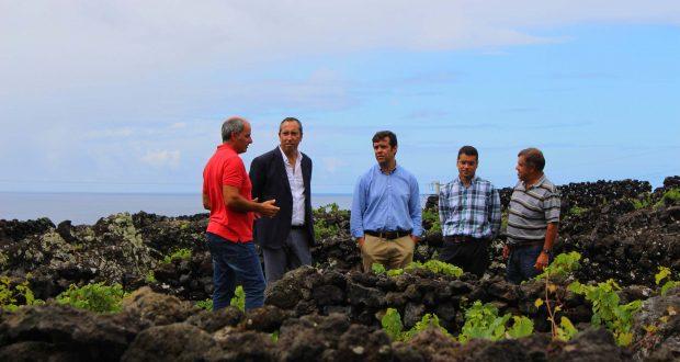 Governo dos Açores propõe reforço da dotação do POSEI para ajuda à manutenção da vinha para fazer face ao crescimento do setor