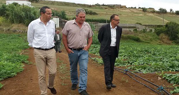 Dotação para ajuda à produção de horto-fruti-floricultura aumenta 10% no POSEI 2018