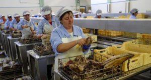 Conselho de Ilha de São Jorge pede suspensão imediata da privatização da Indústria Conserveira Santa Catarina (c/áudio)