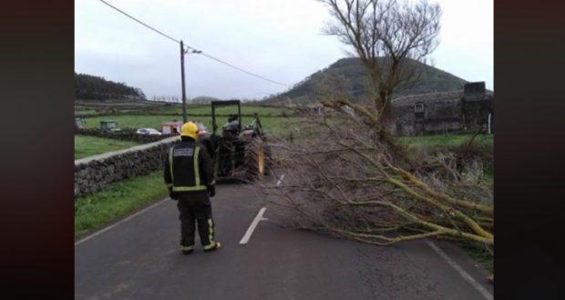 Vento causa queda de árvore em Rosais – estrada já está desobstruída