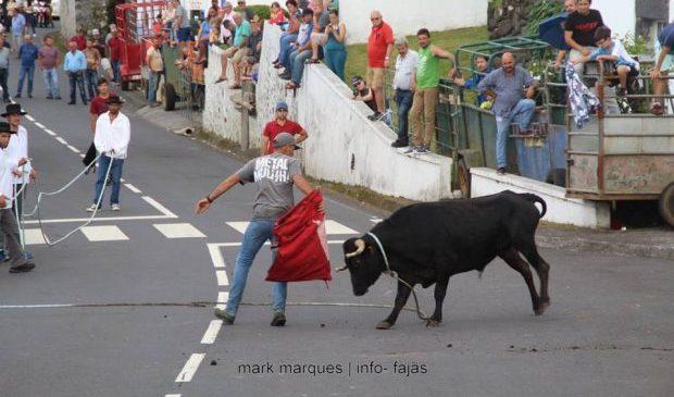 Governo dos Açores vê com bons olhos a implementação de campanha de sensibilização bilingue sobre a tourada à corda