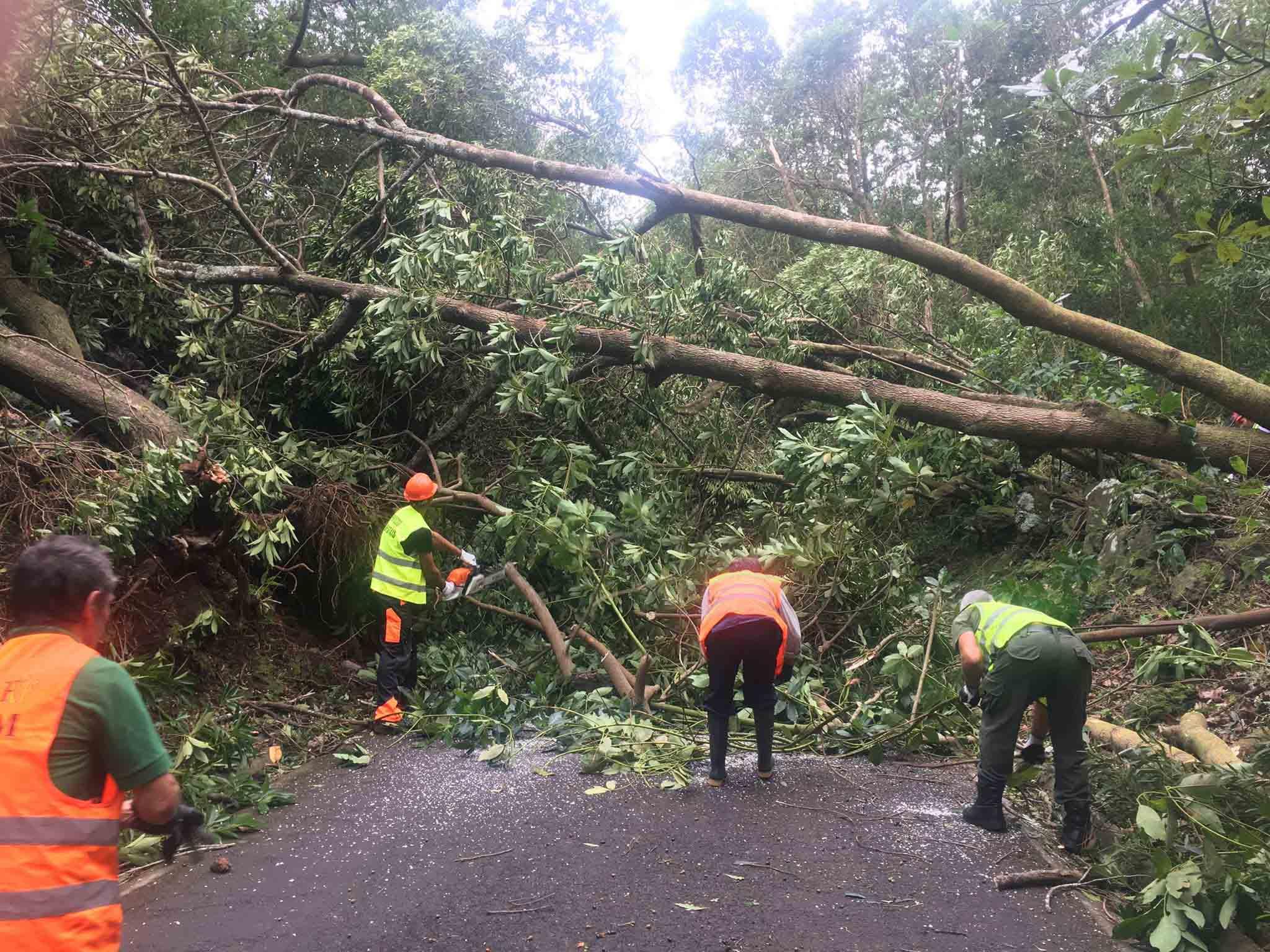 Mais de 150 meios humanos e uma centena de equipamentos da Direção Regional dos Recursos Florestais estão no terreno a desobstruir caminhos