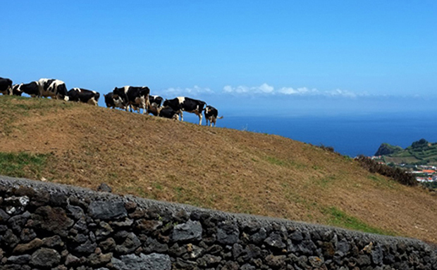 Açores vão receber 77 milhões de euros anuais do POSEI-Agricultura
