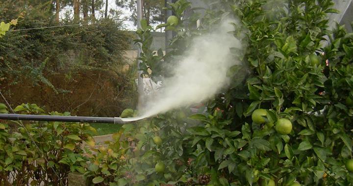 Novo regime de aplicação de produtos fitofarmacêuticos nos Açores minimiza riscos ambientais