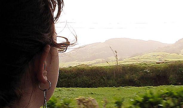 Censo anual de Milhafres decorre nos Açores a 5 e 6 de abril