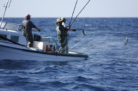 Governo dos Açores regulamente a prática de pesca 'em mancha'