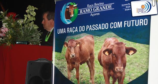 """""""É preciso apostar e valorizar a carne"""" dos bovinos da Raça Ramo Grande, considera João Sequeira (c/áudio)"""