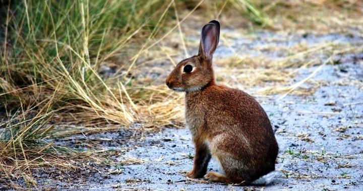 Plano para a recuperação das populações de coelho bravo debatido com associações de caçadores