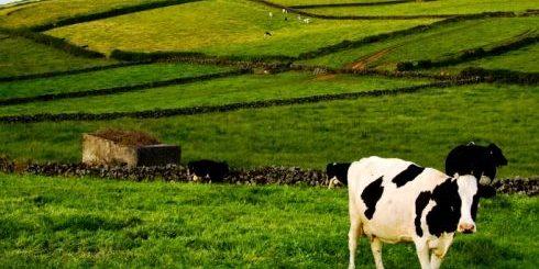 Empresários agrícolas podem candidatar-se a apoios para investimento na proteção das explorações