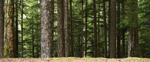 Abertas candidaturas no âmbito do PRORURAL+ para revitalização das florestas