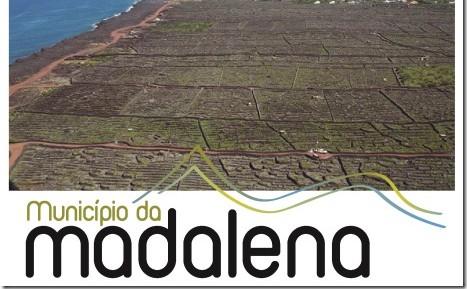 Madalena é capital dos Açores da Vinha e do Vinho