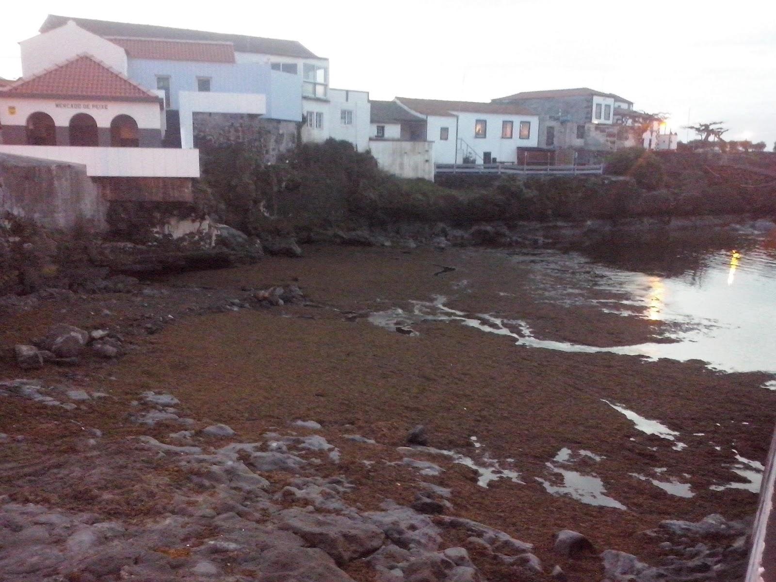 Análises às águas no Porto da Madalena não detetam qualquer problema microbiológico relacionado com a concentração de 'sargaço'