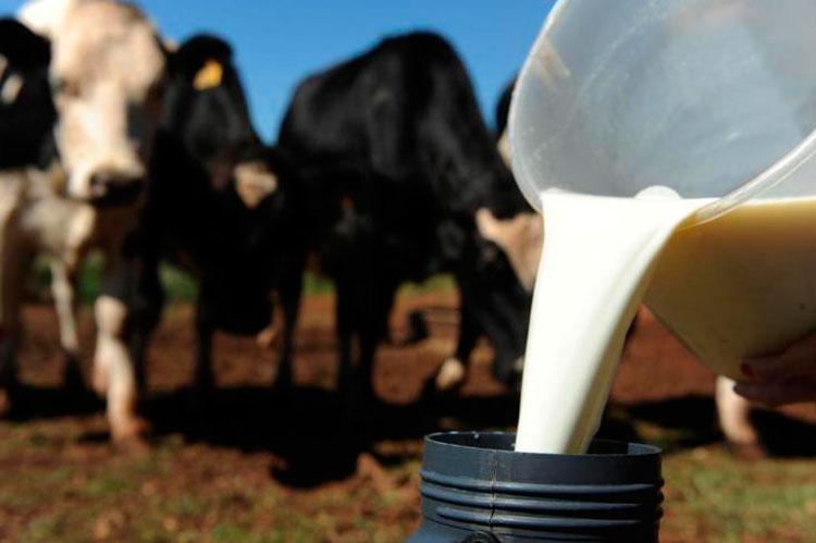 Açores presentes num Conselho Europeu de Ministros de Agricultura crucial para a fileira do leite