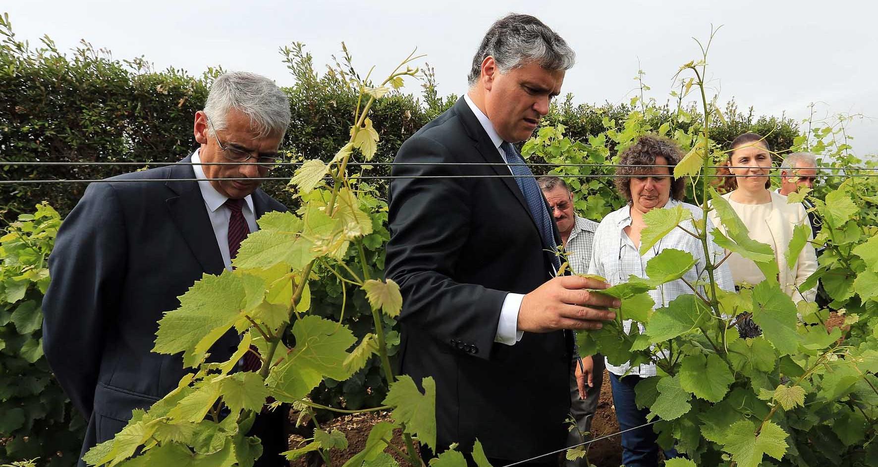Estratégia para potenciar setor vitivinícola permite recuperar mais de 326 hectares, anuncia Vasco Cordeiro