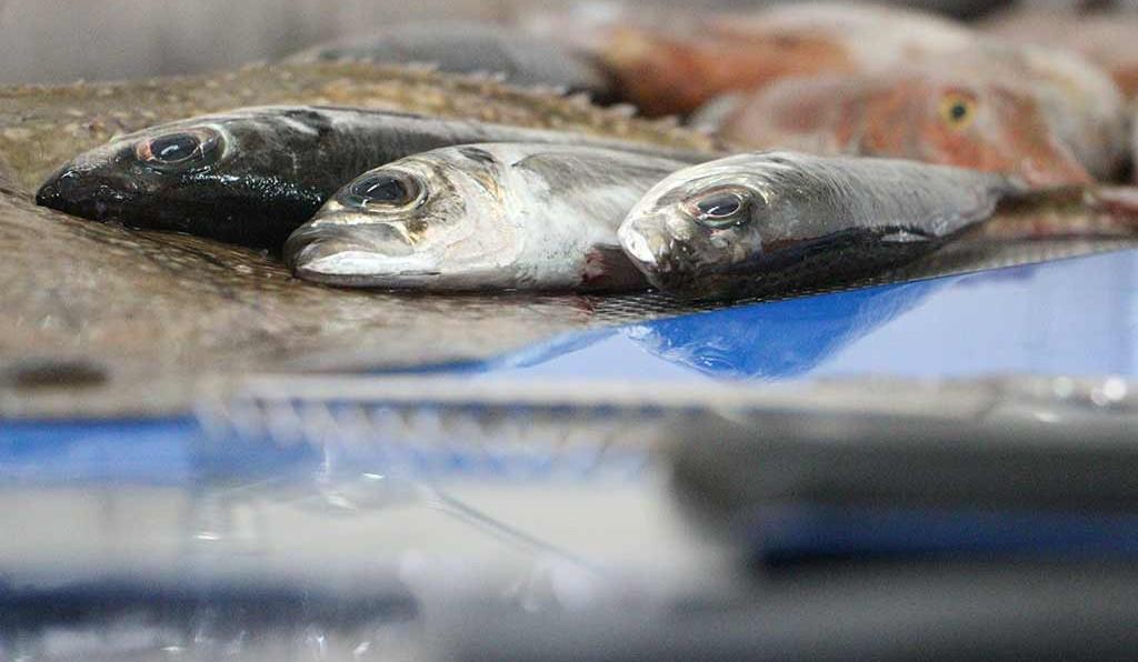 Governo dos Açores regulamenta atribuição de 'caldeirada' na pesca