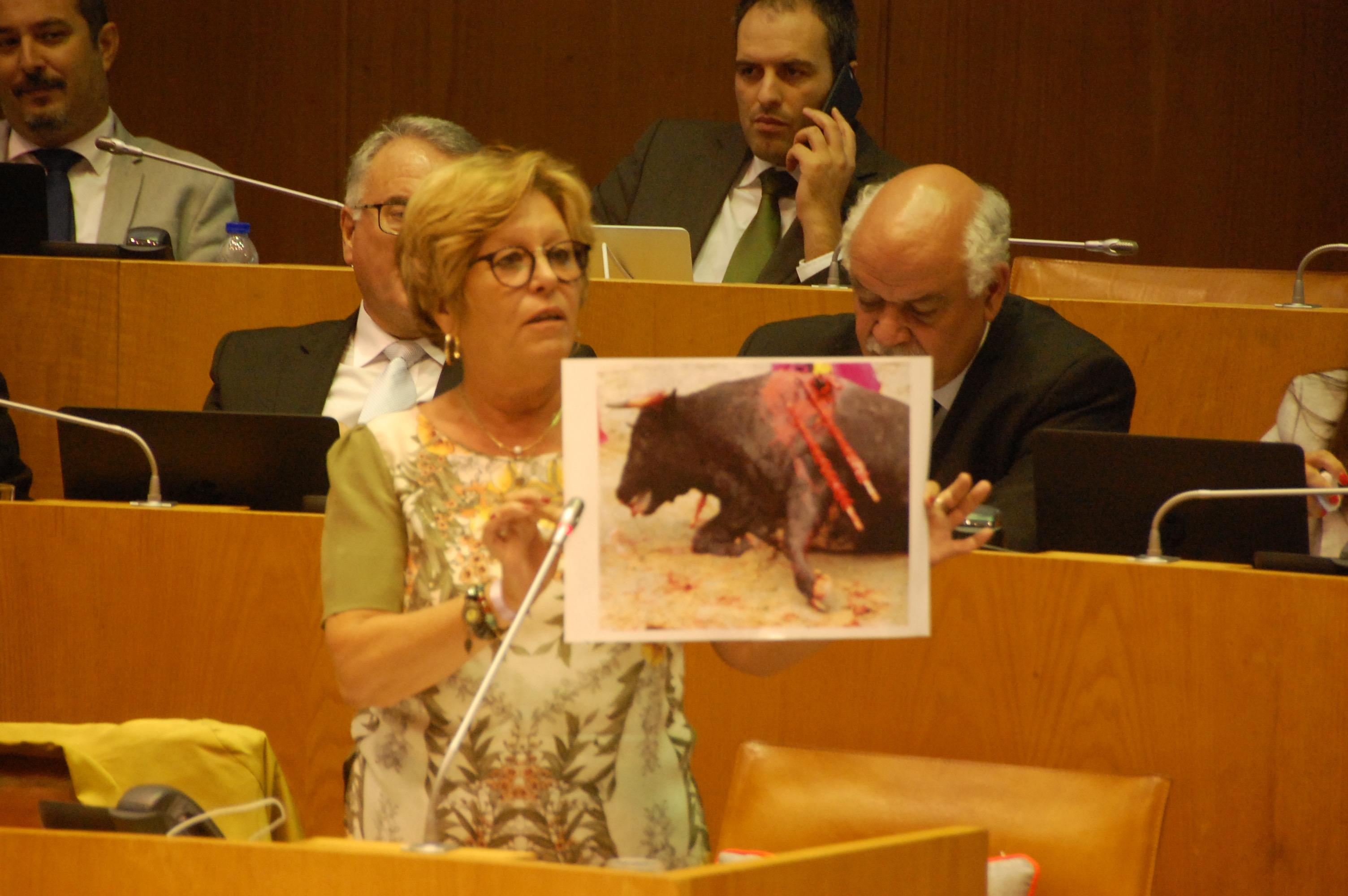 Chumbada proposta do BE para acabar com apoios públicos a espetáculos com sofrimento de animais