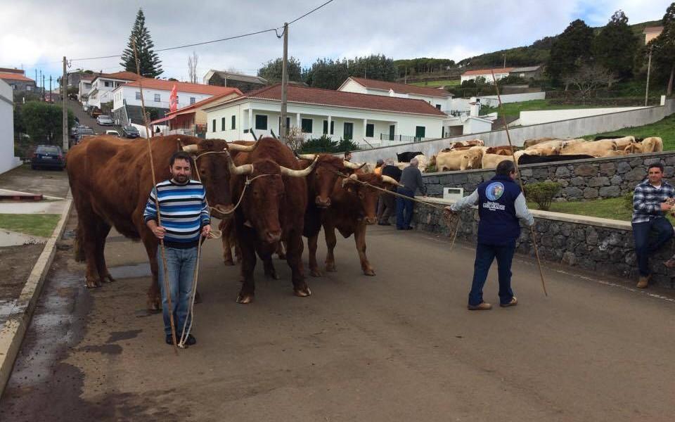 Com mais ou menos afluência Festa de Santo Antão continua a realizar-se em Rosais (c/áudio)