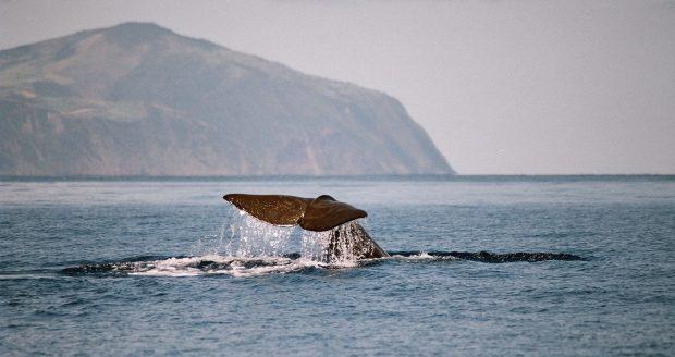 Açores distinguidos pela European Best Destination em duas categorias